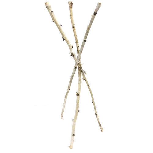 WeddingDecor-Birch-Branches-Short