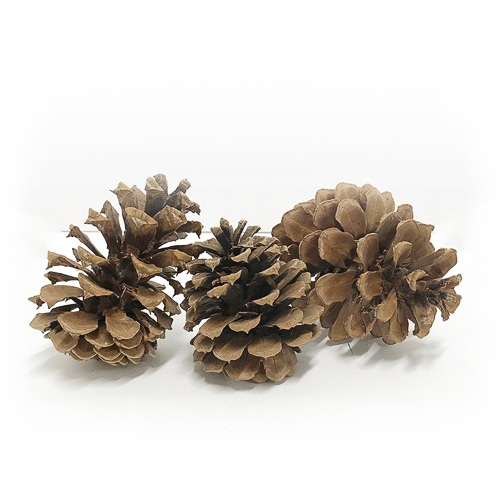 WeddingDecor-Pinecones