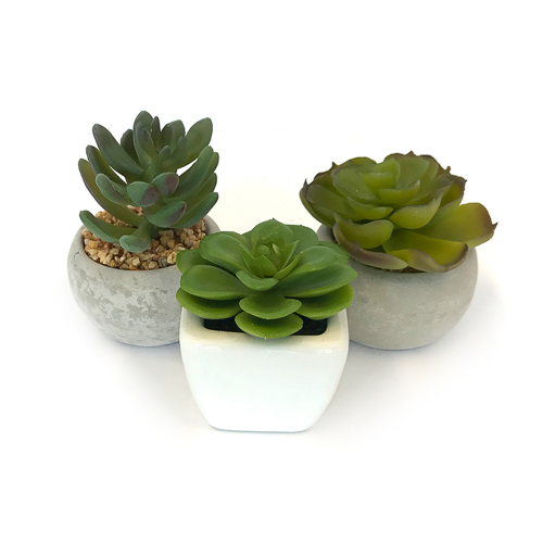 WeddingDecor-Succulents